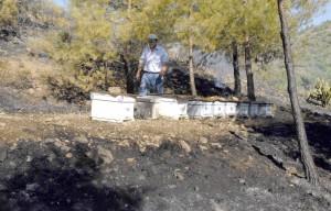 OKUND0016 4 - Dalaman'da makilik yangını