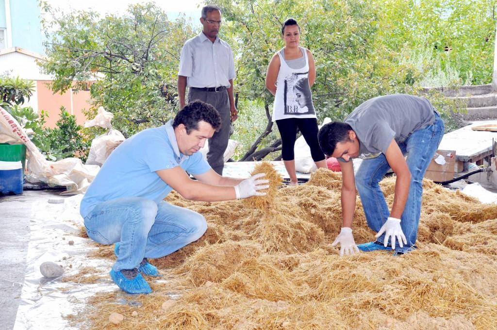 1 11 - Kayın mantarı üretimi başladı