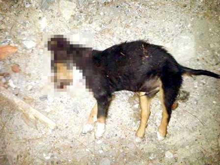 Yavru köpeğin kafasına  vurarak öldürüldüğü iddiası
