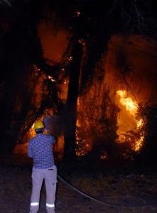 OMR 0431 - Sarıgerme alev alev yandı