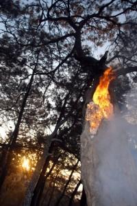 OMR 0448 - Sarıgerme alev alev yandı