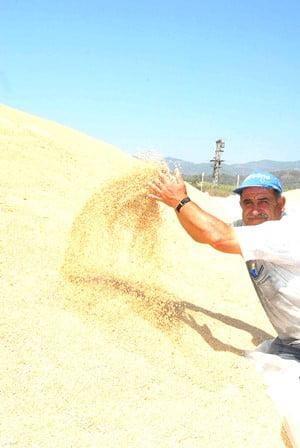 TİGEM'den Buğday ihalesi