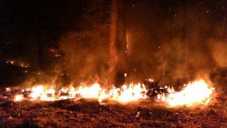 Otmanlar'da orman yangını