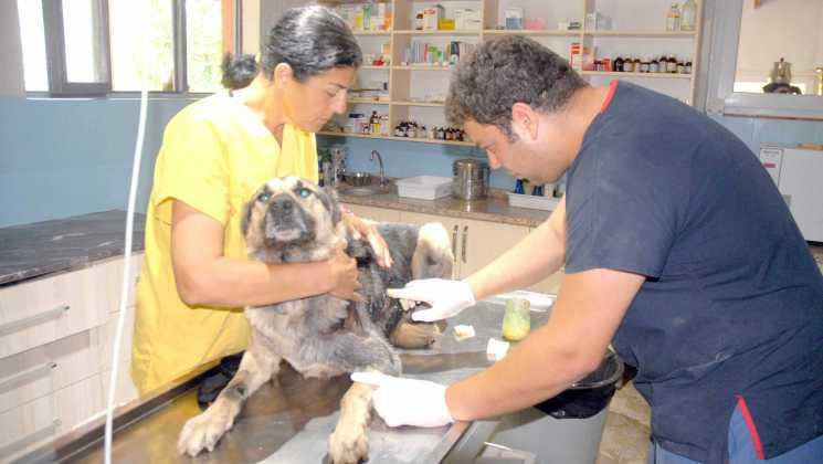 """OMR 0109 - Çoban köpeği """"Kantar"""" koruma altında"""