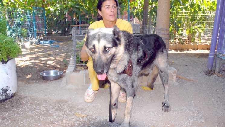 """OMR 0117 - Çoban köpeği """"Kantar"""" koruma altında"""